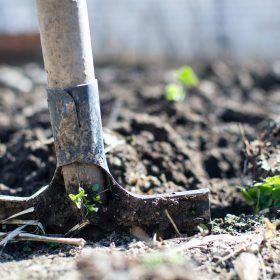 Lente: klussen, beplanten en een afvalcontainer huren