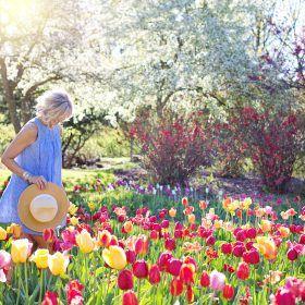 De tuin zomerklaar maken = tuinafval container huren